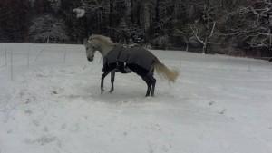Ein Voltigierpferd für den Verein