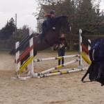 Lehrgänge für die Reitabzeichen 9-6 und den Basispass Pferdekunde
